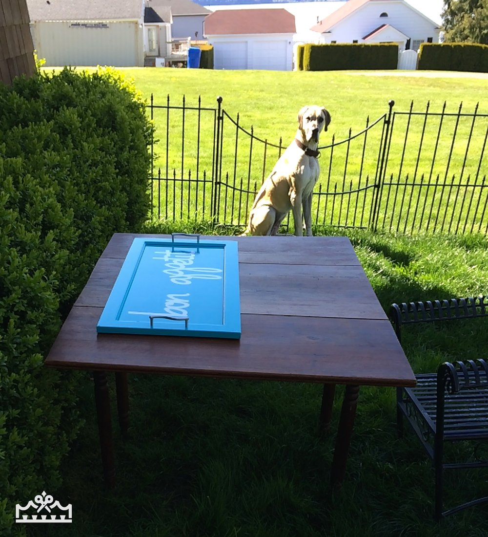 dog outside with cabinet door tray