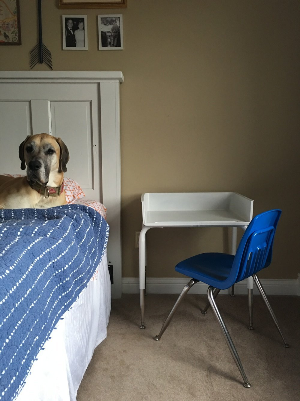 dog on bed next to kid's desk