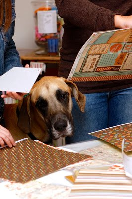 women and dog looking at scrapbooking paper