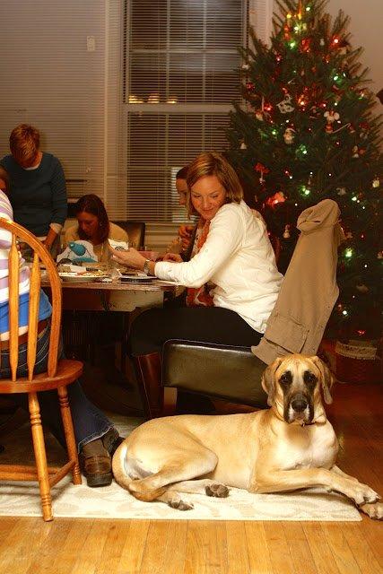 woman sitting at table and looking at big dog