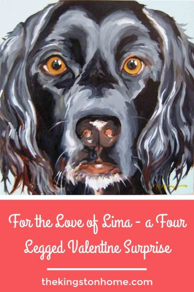 For the Love of Lima – a Four Legged Valentine Surprise - The Kingston Home