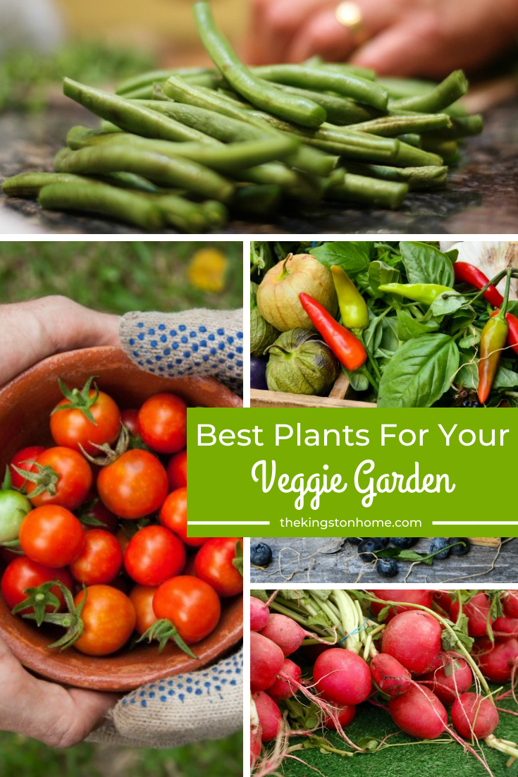 Best Plant For Your Veggie Garden - The Kingston Home: Have you been wanting to grow your own vegetables? Them check out today's blog post where we talk about the best plants to grow for your own veggie garden! via @craftykingstons
