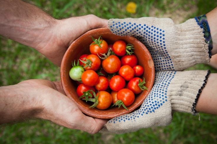 most rewarding vegetables to grow tomatoe