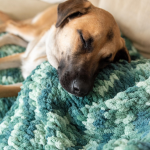 dog laying on knitted blanket